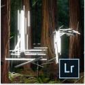 Lightroom + Pro Edition